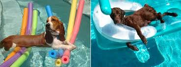 pool floats for dogs. Delighful Floats Dogsonpoolfloats In Pool Floats For Dogs T