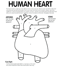 Anatomical Heart Coloring Pages Anatomy Human Page Color Playanamehelp