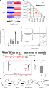 Multiple Genes Recruited From Hormone Pathways Partition