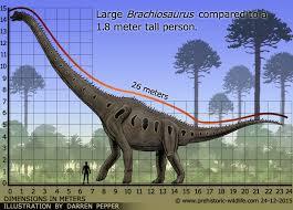 brachiosaurus size brachiosaurus