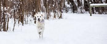 <b>Spring</b> Lake <b>Dog</b> Off-leash Area   Three Rivers Park District