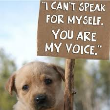Against Animal Rights Quotes. QuotesGram