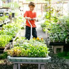 Kitchen Garden Trough Single Container Vegetable Garden Sunset