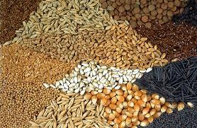 Resultado de imagen de semillas