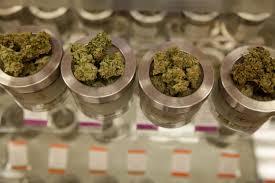 oregon marijuana archives medical marijuana in this friday 26 2015 photo different varieties of marijuana flowers are