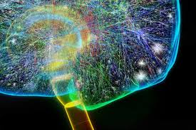 cerebral cortex in rats' brains is set up like the internet usc news human brain wiring diagram Brain Wiring Diagram #29