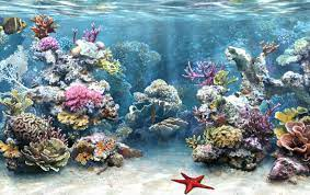 Aquarium Background 3d Wallpaper