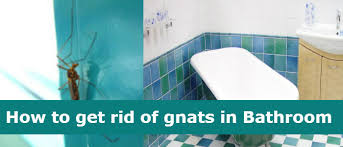 why do i get gnats in my bathroom