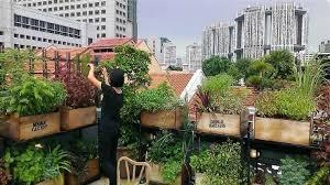 edible garden city ubs edible garden city
