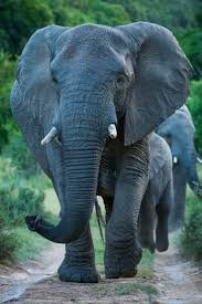 1617 best images about Beautiful Animals on Pinterest