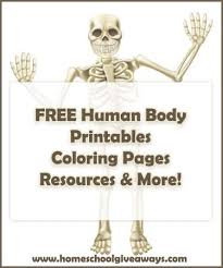 Small Picture Human Anatomy Freebies