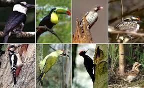 Класс птицы фото описание доклад информация сообщение общая  Класс птицы краткое описание