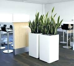 large indoor plant pots tall indoor plant pots planters large indoor plant pots planter ideas white large indoor plant