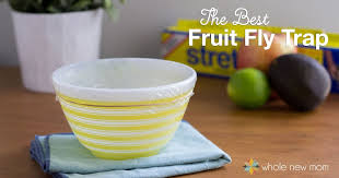 the best diy fruit fly trap are pesky fruit flies driving you batty i