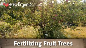 PEACH TREES  TIME LAPSE  Slide Show How To Grow Peaches  YouTubeHow Often Should I Water My Fruit Trees