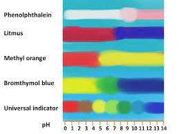 Red Cabbage Juice Indicator Chart Natural Indicators Bush Tucker Chemistry