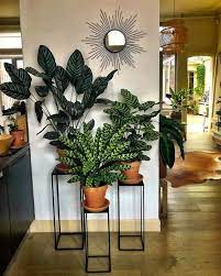 plant stand decor house plants indoor