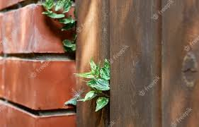 free photo green ivy leaves sprouting