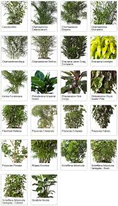 best good tropical indoor plants with mediumlight with tropical house plants