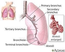 atypical pneumonia information mount