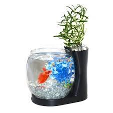 Amazon.com: Elive Betta Fish Bowl / Betta Fish Tank with Planter, Small  0.75 Gallon Aquarium, LED Light Timer, Black: Pet Supplies