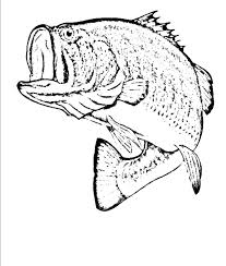 Small Picture Bass Fish Coloring Pages In Es Coloring Pages