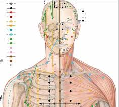 Body Acupuncture Chart Vr1820
