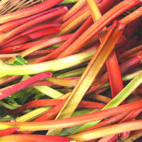 rhubarb laxative effect