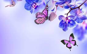 Butterflies Laptop Wallpapers - Top ...