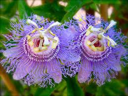 Beautiful, But Weird Flowers - Lauren Q Hill
