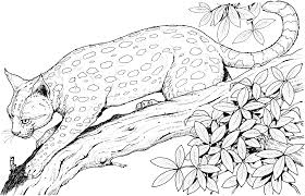 Small Picture Coloring Pages Animals Leopard Colouring Pages Animals Cat