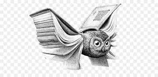 owl drawing book art ilration creative ilration owl