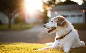 Dog wallpaper, Cute dog pictures ...