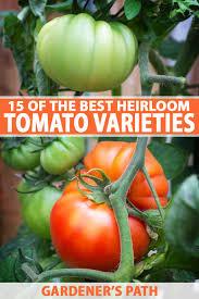 The Best Heirloom Tomato Varieties Gardeners Path