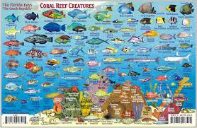 Florida Keys Fish Card Frankos Fabulous Maps Of Favorite