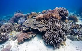 real underwater world. Simple World Enjoy The Underwater World 13954 For Real Underwater World