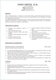 Professional Cv Examples Resume Example