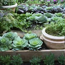 Small Picture Landscaping in Sri Lanka Kitchen garden designs