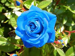 نتیجه تصویری برای گل زيبا