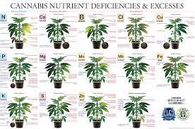 Cannabis Plant Nutrient Deficiencies Excesses
