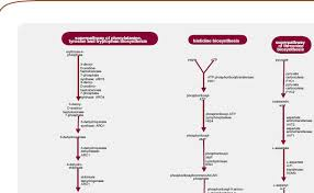 You Know You Want A Yeast Biochemical Pathways Wall Poster