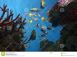 Pesci di mare barriera corallina tropicale fotografie stock