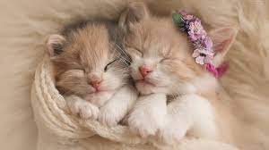 Cute Cat Pictures Hd Wallpapers Download
