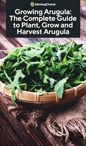Arugula Companion Planting Chart Arugula Companion Plant Unltddelhi Org