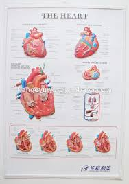Anatomy Of The Heart Chart 3d Human Heart System Anatomical Chart Buy Anatomical Chart 3d Anatomical Chart 3d Anatomical Poster Product On Alibaba Com