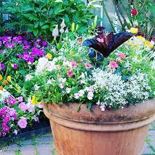 garden flowers pretty botany