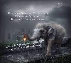 Elephant Quotes Cool Elephant Love You Quotes On QuotesTopics