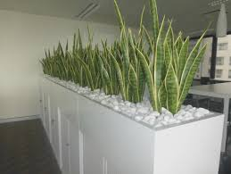 office planter boxes. Ideas About Corporate Office Decor On Pinterest Planter Box Of .. Office Planter Boxes N