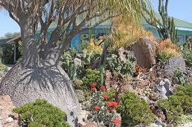 san go botanic garden to host succulent show fall festival this weekend