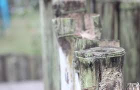Gratis Stockfoto Van Achtergrond Bamboe Behang Bamboe Mat